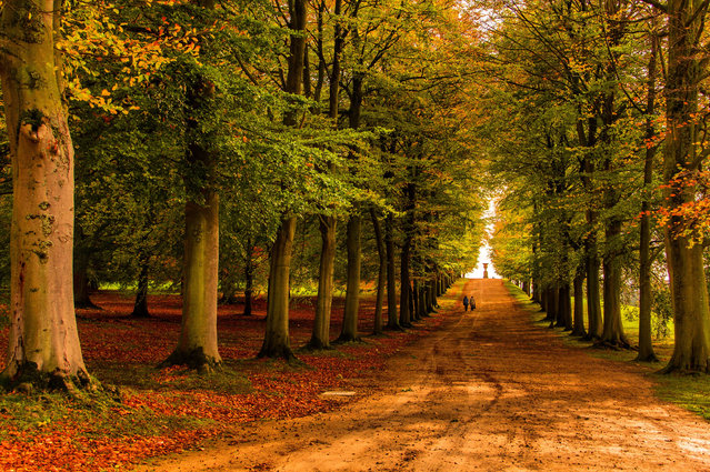 """Runner-up. """"Autumn is a cold season, but when I see how colourful leaves sparkle in the sunlight, as in this scene in Chatsworth Garden, Derbyshire, I feel warm inside and happy"""". MICK RYAN, JUDGE: """"As it is peak autumn a beech photograph is a must, and this is a classic. The strong lead in of the carriageway culminating in two strong focal points of the people and the fountain, all framed by the repeating lines of the beech trees. Wonderful"""". (Photo by Goran Erfani/The Guardian)"""