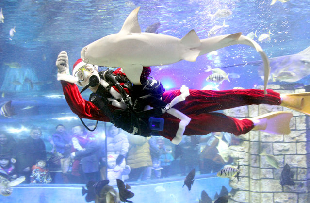 A diver dressed in Santa Claus costume feeds animals at an aquarium ahead of Christmas day in Suzhou, Jiangsu province, China, December 24, 2016. (Photo by Reuters/Stringer)