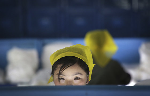 In this Friday, January 6, 2017, photo, a North Korean woman working at the Kim Jong Suk Silk Mill looks up from her workstation in Pyongyang, North Korea. The silk mill, named after North Korean leader Kim Jong Un's grandmother, is where 1,600 workers – mostly women – sort and process silkworms to produce silk thread that officials at the Pyongyang factory say is made into roughly 200 tons of silk a year. (Photo by Wong Maye-E/AP Photo)