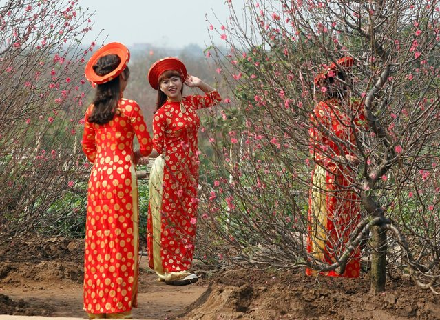"Women, wearing traditional ""ao dai"" dress, pose for a photo next to peach blossom flowers ahead of Vietnamese ""Tet"" (the lunar new year festival) in a field in Hanoi January 22, 2017. (Photo by Reuters/Kham)"