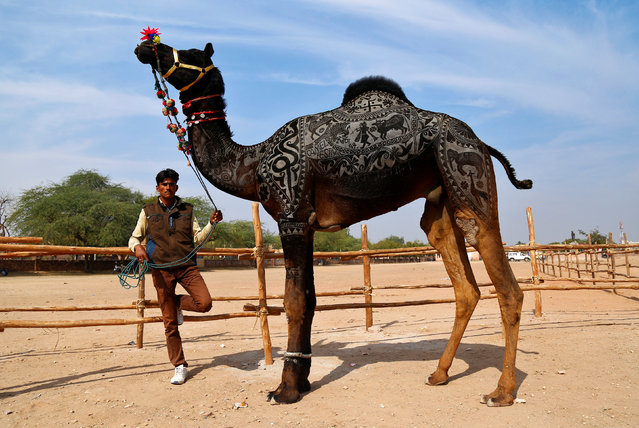 A man waits with his camel to take part in a camel decoration competition at the Nagaur Cattle Fair, where animals like camels, cows, horses, and bulls are brought to be sold or traded, in Nagaur, in the desert state of Rajasthan, India February 2, 2017. (Photo by Himanshu Sharma/Reuters)