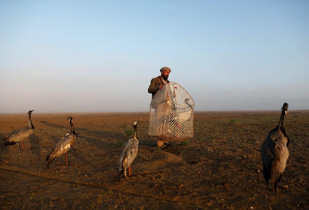 Bird Hunters of Afghanistan