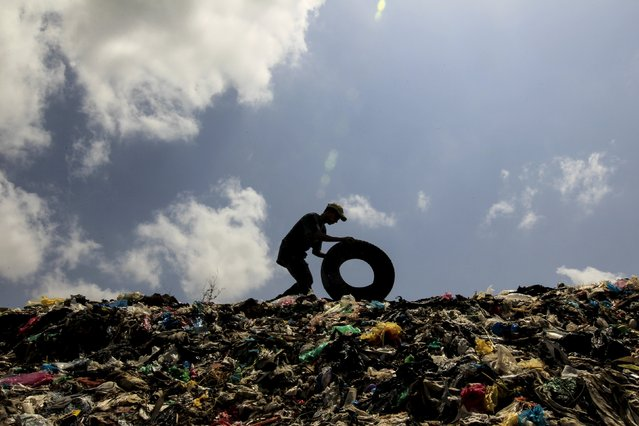 Josue Salazar (19), a student of agronomy, collects discarded tyres in Masaya's municipal garbage dump May 7,2015. (Photo by Oswaldo Rivas/Reuters)