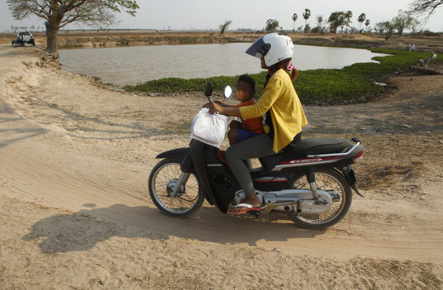 A woman rides her motorbike with her child past a pond during a severe dry spell on the outskirts of Phnom Penh, Cambodia, Tuesday, April 26, 2016. Cambodia's prime minister says the country's people must mobilize to help deal with the worst drought in the last four decades, which has left roughly two-thirds of the country's 25 provinces short of water for drinking and other necessities. (Photo by Heng Sinith/AP Photo)