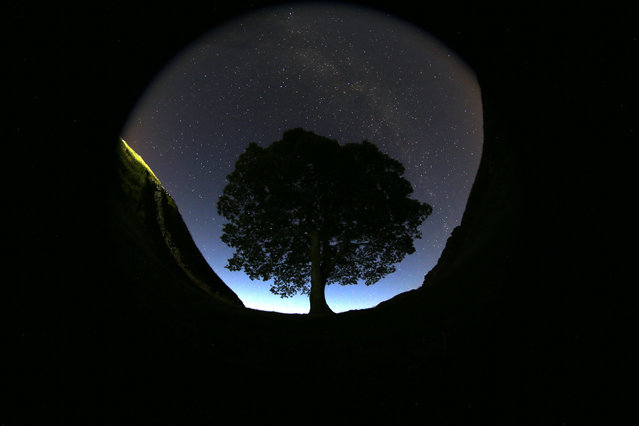 A general view of the stars above Sycamore Gap prior to the Perseid Meteor Shower above Hadrian's Wall near Bardon Mill, England, Wednesday, August 12, 2015. The annual Perseid meteor shower reaches its peak on Wednesday night, but much of the UK is facing cloudy conditions. The best places to view the event is in northern England and Scotland. (Photo by Scott Heppell/AP Photo)