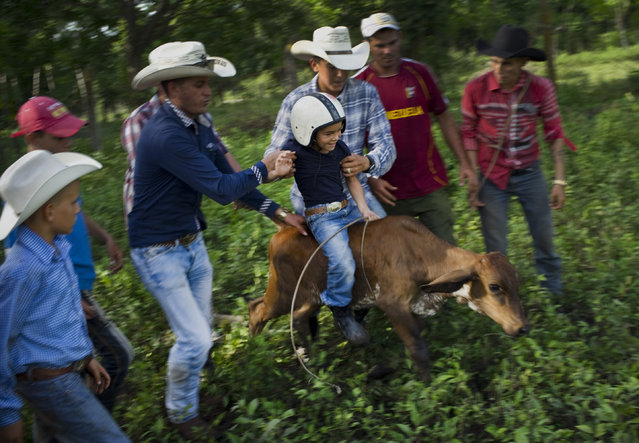 In this July 29, 2016 photo, cowboys team up to help 5-year-old cowboy David Obregon learn to ride a calf during an improvised rodeo game at a farm in Sancti Spiritus, central Cuba. In the Cuban countryside, many children learn to ride a horse before they learn to ride a bicycle. In Sancti Spiritus' cattle country, 80 children are enrolled in a non-governmental organization called Future Ranchers, founded by a group of neighboring cattle ranchers more than a decade ago to revive Cuba's rodeo culture. (Photo by Ramon Espinosa/AP Photo)