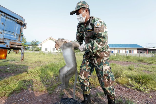 A Thai wildlife department official carries a long-tailed macaque to a cage at a village in Bangkok, Thailand, September 21, 2015. (Photo by Chaiwat Subprasom/Reuters)