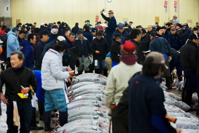 Wholesalers attend the New Year's auction for frozen tuna at the Tsukiji fish market in Tokyo January 5, 2015. (Photo by Thomas Peter/Reuters)
