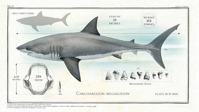 This Megalodon (big tooth) lived between 23 and 2.6m years ago. It is an early relative of the great white shark and palaeontologists believe it was a staggering 20m in length. (Photo by Sky TV/The Guardian)
