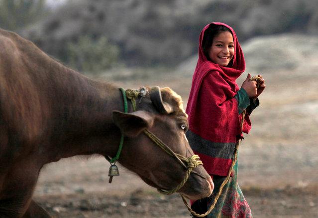 A young girl takes her buffalo to graze in Charsadda outside Peshawar, Pakistan Decmber 3, 2016. (Photo by Fayaz Aziz/Reuters)