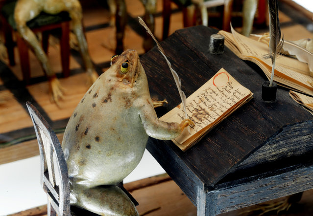 A frog writing documents at the Frog Museum, a collection of 108 stuffed frogs in scenes portraying everyday life in the 19th-century and made by Francois Perrier, in Estavayer-le-Lac, Switzerland on November 7, 2018. (Photo by Denis Balibouse/Reuters)