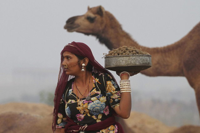 An Indian woman collects camel dung during the annual cattle fair in Pushkar, in the western Indian state of Rajasthan, Sunday, November 10, 2013. Pushkar, located on the banks of Pushkar Lake, is a popular Hindu pilgrimage spot that is also frequented by foreign tourists who come to the town for the annual cattle fair and camel races. (Photo by Ajit Solanki/AP Photo)