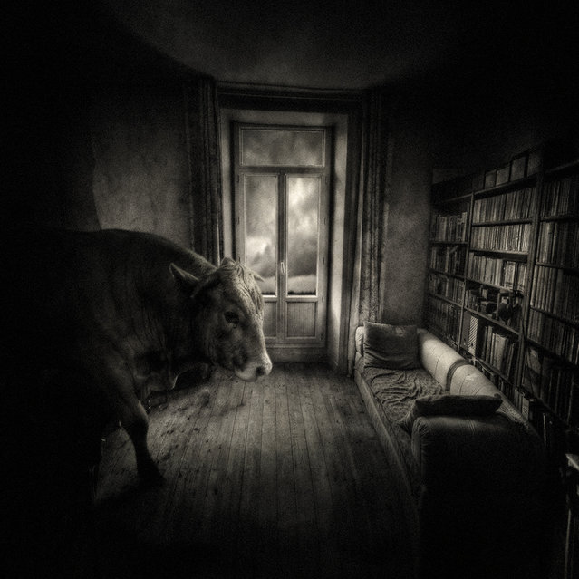 """""""Home pet"""". (Photo and caption by Yves Lecoq)"""