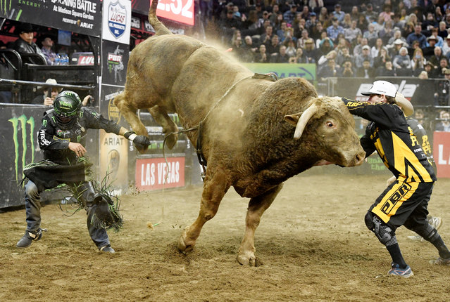 Chase Outlaw dodges Cochise after being bucked off in the final round of the PBR Unleash the Beast bull riding event at Madison Square Garden on January 06, 2019 in New York City. (Photo by Sarah Stier/Getty Images)
