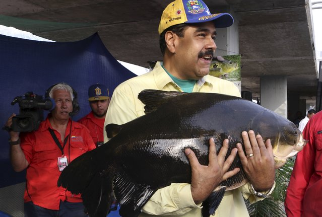 Venezuela's President Nicolas Maduro holds a fish while he attends a ceremony to promote the urban agriculture in Caracas, in this handout picture provided by Miraflores Palace on February 28, 2016. (Photo by Reuters/Miraflores Palace)