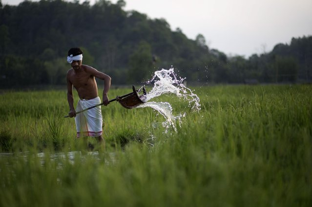 Indian farmer Moneswar Kathar irrigates his paddy field at Khetri village about 40 kilometers (25 miles) east of Gauhati, India, Wednesday, April 22, 2015. (Photo by Anupam Nath/AP Photo)