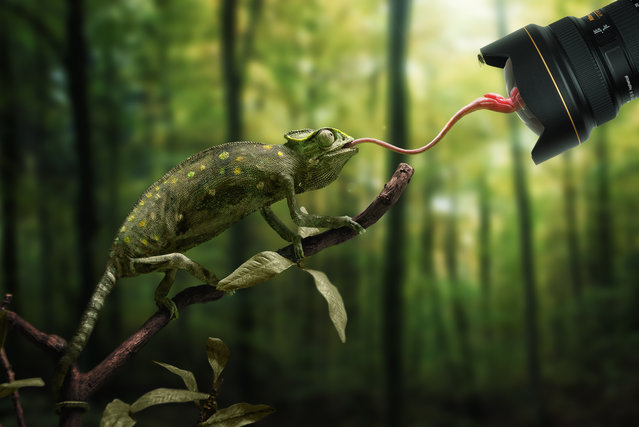 """Just a chameleon action shooting with bait-lens"". (John Wilhelm)"
