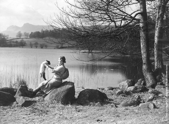 A hiker enjoying the spring sunshine with a young lamb by Loughrigg Tarn in the Lake District