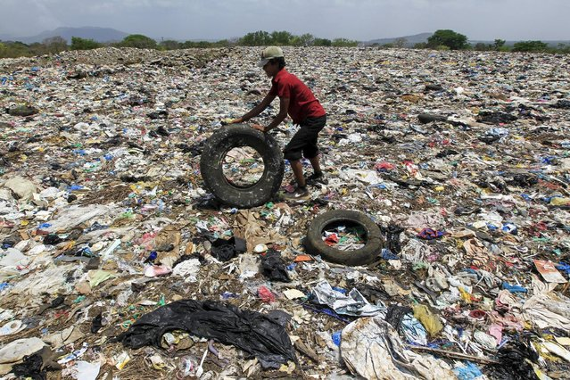 Juan Salazar (15), collects discarded tyres in Masaya's municipal garbage dump May 7, 2015. (Photo by Oswaldo Rivas/Reuters)