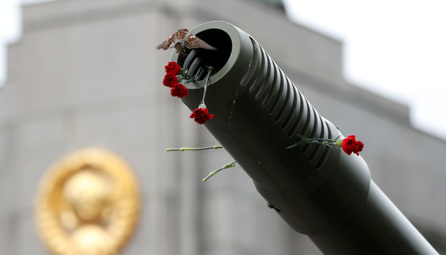 A sparrow is pictured on a canon during the Victory Day celebrations at the Soviet War Memorial in Berlin, Germany, May 9, 2019. (Photo by Fabrizio Bensch/Reuters)