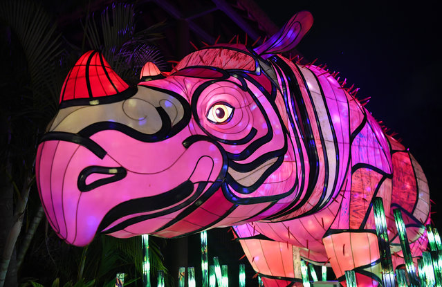 An illuminated lantern sculpture of a rhino during the media preview of Vivid Sydney at Taronga Zoo on May 19, 2019 in Sydney, Australia. (Photo by James D. Morgan/Getty Images)