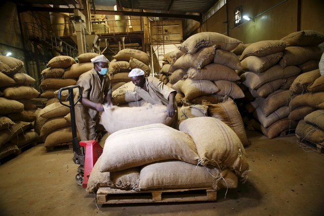 Workers arrange bags containing cocoa beans at a cocoa processing factory in Ile-Oluji village in Ondo state, southwest Nigeria March 30, 2016. (Photo by Akintunde Akinleye/Reuters)