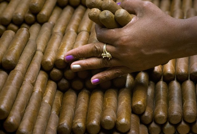 A sorter selects cigars at the H. Upmann cigar factory in Havana, Cuba, Thursday, March 2, 2017. Distributors abroad are reporting record sales, making cigar sales an important source of foreign revenue for the cash-strapped government. (Photo by Ramon Espinosa/AP Photo)