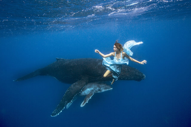 Tara swimming with Humpbacks in Tonga. (Photo by Jeremy Farris/Caters News)