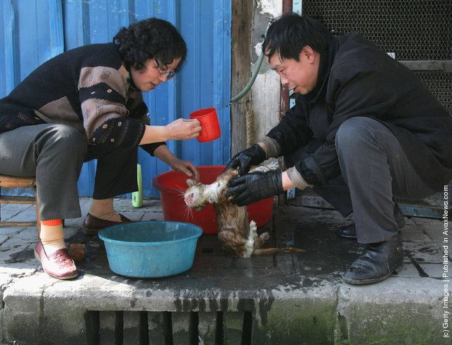 Residents wash their cat at a street in Chengdu of Sichuan Province, China