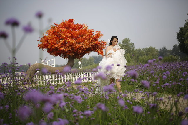 A Chinese woman walks in amidst flowers in her bridal gown during a photo shoot at the Landiao Zhuangyuan or Blues Manor Lavender Garden in Beijing, China, 26 July 2015. As China develops and becomes more urbanized, farms around big cities like Beijing are moving away from pure agriculture to integrate more leisure and tourism activities to attract city dwellers wishing for a different experience. (Photo by How Hwee Young/EPA)