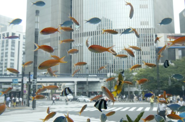 Tropical fish from the southern Japanese island of Okinawa swim in a temporary aquarium in Tokyo's Ginza shopping district July 29, 2015. (Photo by Toru Hanai/Reuters)