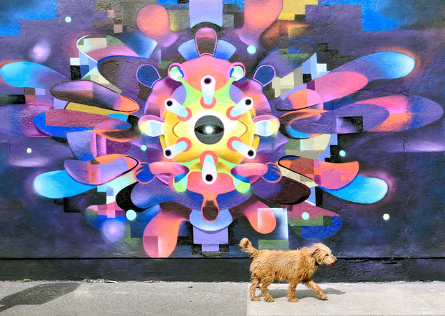 A dog walks past a mural depicting a coronavirus Covid-19 cell in Dublin City, Ireland, 28 March 2020. The Irish government announced further public movement restrictions asking everyone except neccessary workers to stay at home. Countries around the world are taking measures to stem the widespread of the SARS-CoV-2 coronavirus which causes the Covid-19 disease. (Photo by Aidan Crawley/EPA/EFE)