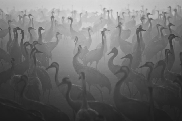"""Lost"". Morning fog on Hula Lake, Israel. (Photo and caption by Guy Cohen/National Geographic Traveler Photo Contest)"