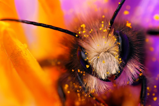 Bee. (Photo by Boris Godfroid)