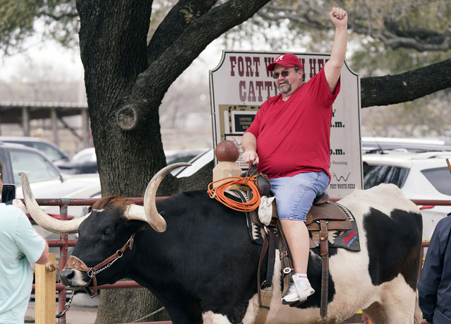 Jerome Holcomb of Birmingham, Ala., posses for a photo atop a longhorn steer at the Fort Worth Stockyards Thursday, March 11, 2021, in Fort Worth, Texas. The mask mandate to prevent the spread of COVID-19 has been cancelled in Texas. Holcomb said he was tired of wearing a face mask so he came to visit Fort Worth after the Alabama governor extended the mask mandate in his home state. (Photo by L.M. Otero/AP Photo)