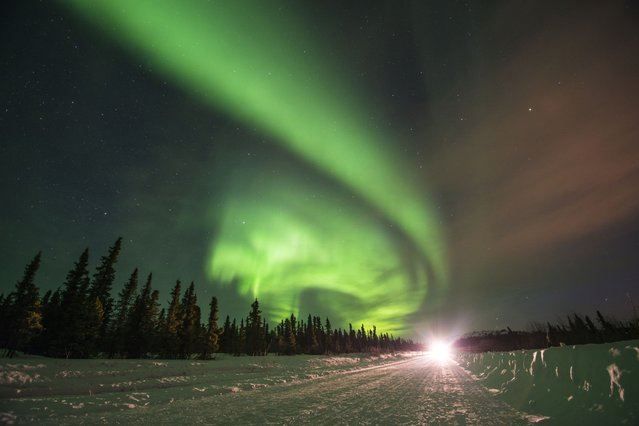 Northern lights (Aurora borealis) glow brightly over Steese Highway in Fairbanks, Alaska. (Photo by Steven Kazlowski/Barcroft Media)