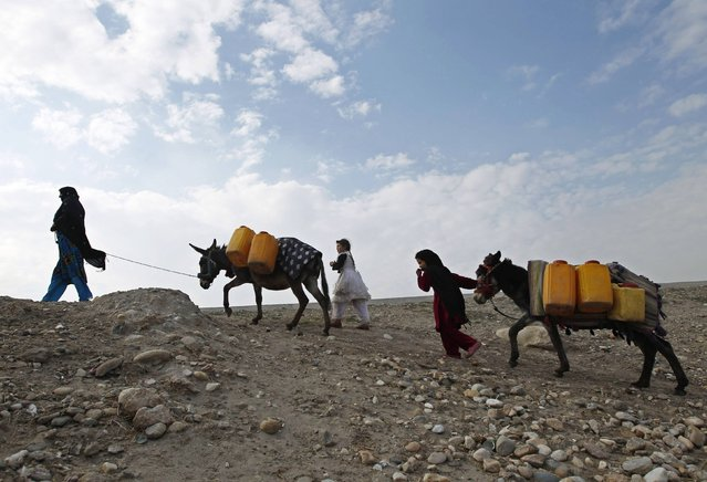 An Afghan internally displaced family carries water containers on their donkeys on the outskirts of Jalalabad city, January 26, 2015. (Photo by Reuters/Parwiz)