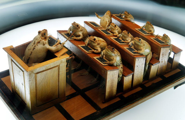 Frogs attending school at the Frog Museum, a collection of 108 stuffed frogs in scenes portraying everyday life in the 19th-century and made by Francois Perrier, in Estavayer-le-Lac, Switzerland on November 7, 2018. (Photo by Denis Balibouse/Reuters)