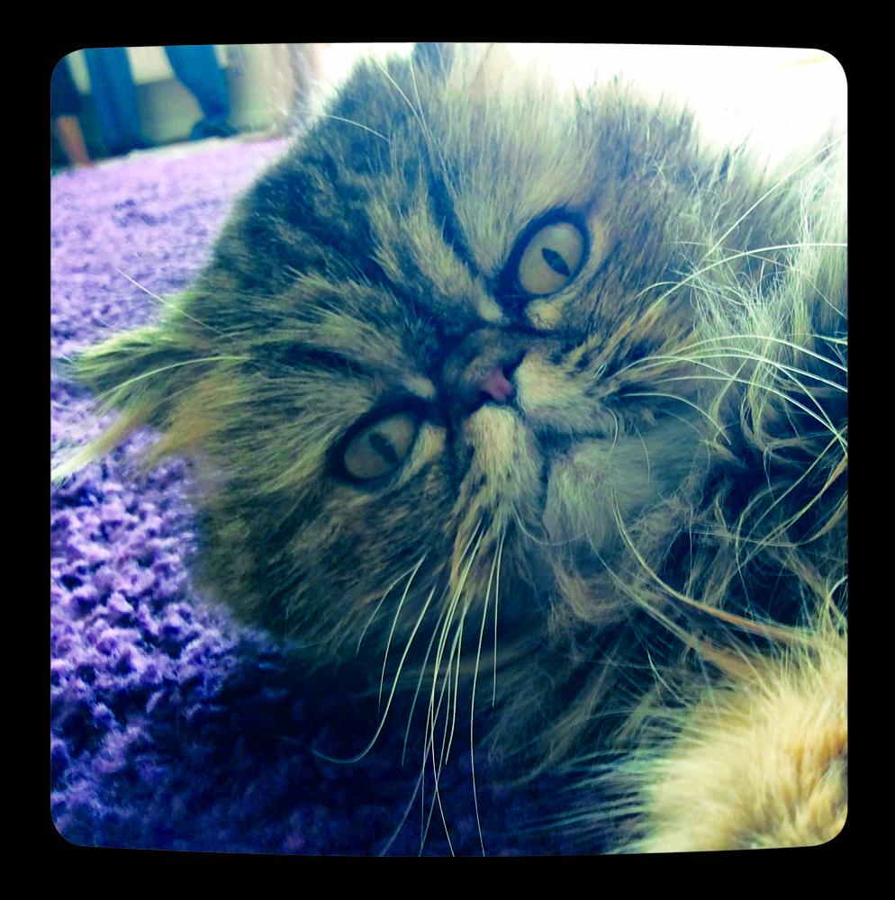 """""""Cat Selfies"""""""