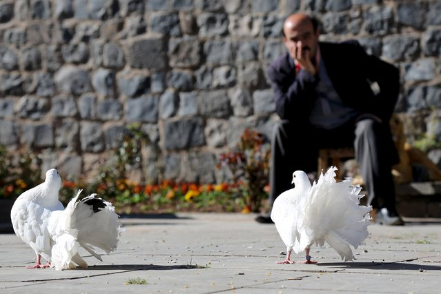 A man sits at a park in Sur district, which is partially under curfew, in the Kurdish-dominated southeastern city of Diyarbakir, Turkey March 17, 2016. (Photo by Sertac Kayar/Reuters)