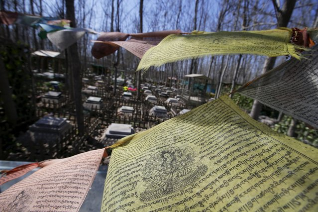 Tibetan prayer flags wave above a pet dog's tomb at Baifu pet cemetery ahead of the Qingming Festival on the outskirts of Beijing, China March 26, 2016. (Photo by Jason Lee/Reuters)