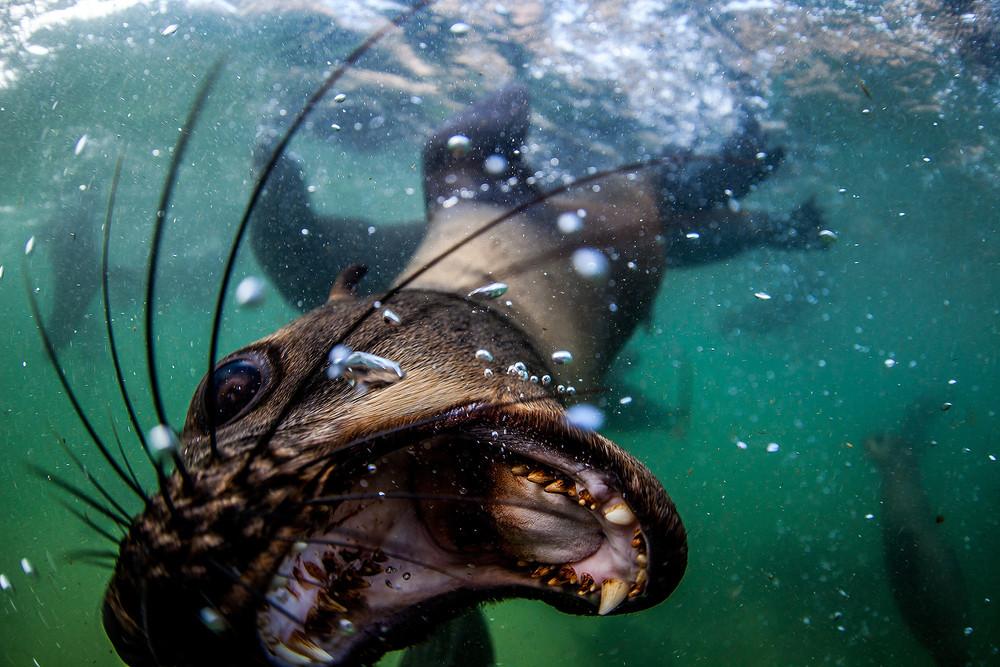 Seals Close-Up