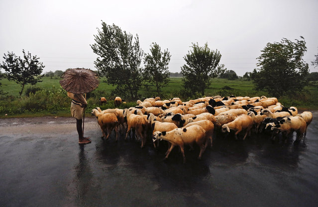 A shepherd holds an umbrella as he stands on a highway with his flock in Srikakulam district in the southern Indian state of Andhra Pradesh October 12, 2013. Rain and wind lashed India's east coast on Saturday, forcing more than 400,000 people to flee to storm shelters as one of the country's largest cyclones closed in, threatening to cut a wide swathe of devastation through farmland and fishing hamlets. (Photo by Adnan Abidi/Reuters)