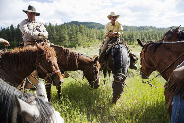 Rancher Steve Pargin and cowboy David Thompson (R) talk with the rest of the crew during a cattle drive near Ignacio, Colorado June 12, 2014. The land where the cattle graze is leased from the Forest Service by third-generation rancher Steve Pargin. Several times a year, he and a crew led by his head cowboy, David Thompson, spend a week or more herding cattle from mountain range to mountain range to prevent them from causing damage to fragile ecosystems by staying in a single area too long. (Photo by Lucas Jackson/Reuters)