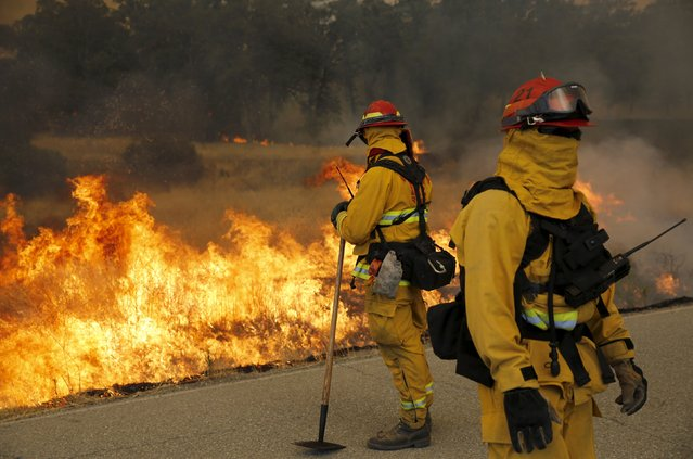 Firefighters watch a controlled burn along Morgan Valley Road during the so-called Jerusalem Fire in Lake County, California August 12, 2015. (Photo by Robert Galbraith/Reuters)