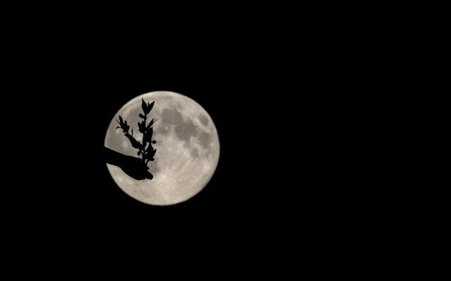 """A supermoon appears behind the Angel of Peace sculpture, in London, Sunday, August 10, 2014. The phenomenon, which scientists call a """"perigee moon"""", occurs when the moon is near the horizon and appears larger and brighter than other full moons. (Photo by Alastair Grant/AP Photo)"""