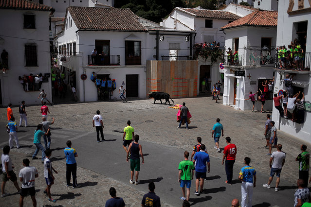 "Runners watch a bull, named Santon, during the ""Toro de Cuerda"" (Bull on Rope) festival at Plaza de Espana square in Grazalema, southern Spain, July 18, 2016. (Photo by Jon Nazca/Reuters)"