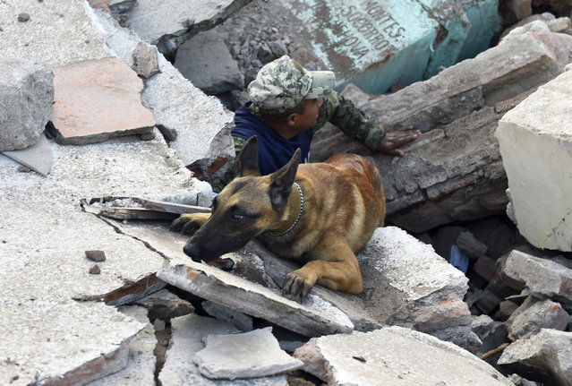 Soldiers with specially trained dogs search for survivors amid the ruins of buildings knocked down Thursday night by a 8.1-magnitude quake, in Juchitan de Zaragoza, Mexico, on September 9, 2017. Police, soldiers and emergency workers raced to rescue survivors from the ruins of Mexico's most powerful earthquake in a century, which killed at least 61 people, as storm Katia menaced the country's eastern coast Saturday with heavy rains. (Photo by Pedro Pardo/AFP Photo)