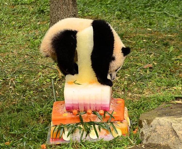 National Zoo Celebrates Panda's 1st Birthday