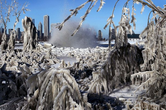 Ice clings to trees and grass along the lakefront after wind gusts upwards of 40 miles per hour blew waves onto the shore and temperatures in the low teens quickly turned the spray to ice December 13, 2010 in Chicago, Illinois. (Photo by Scott Olson)